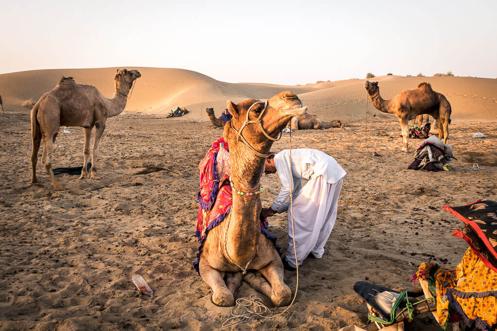 How to Prepare for a Sunset Camel Safari in Jaisalmer